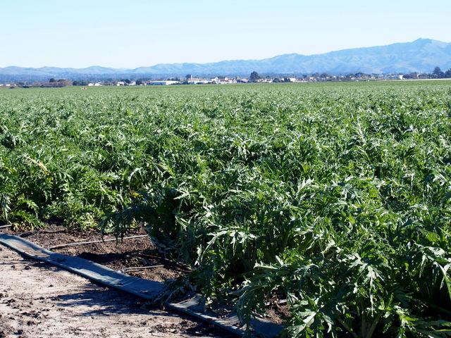 Blooming Glen Farm | California: Farming in a desert