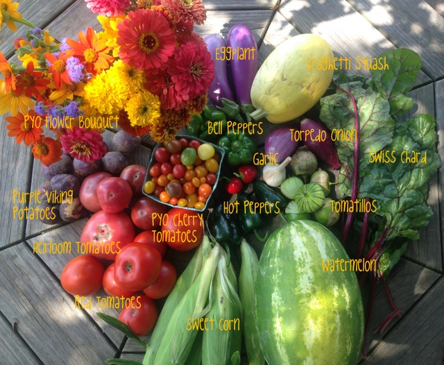 8/4/15, CSA on-farm share #10
