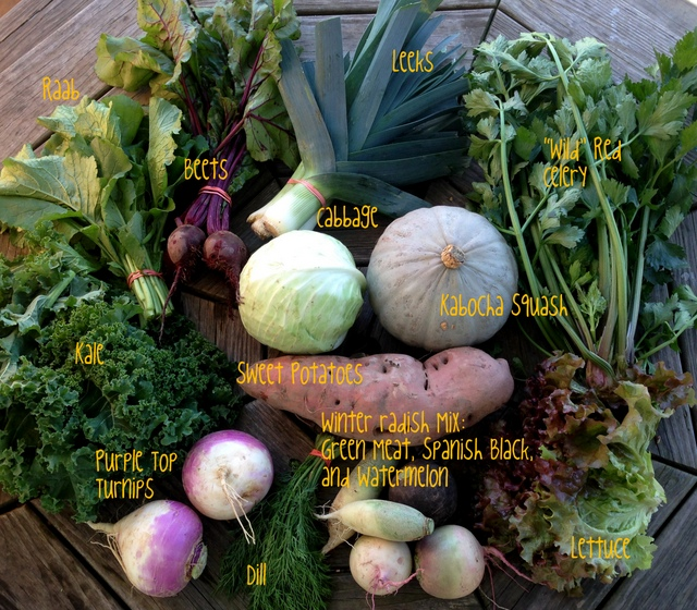 10/20/15, CSA share #21, on-farm week A.