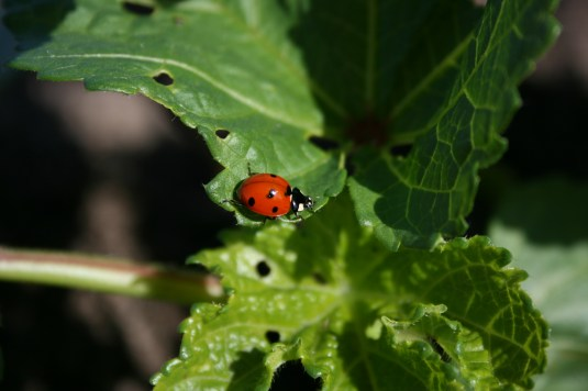 ladybug in action!