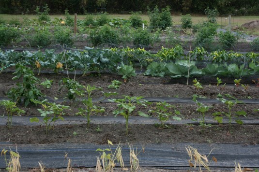 garden guide for easiest vegetables to grow
