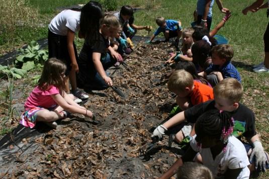 kids planting peanuts