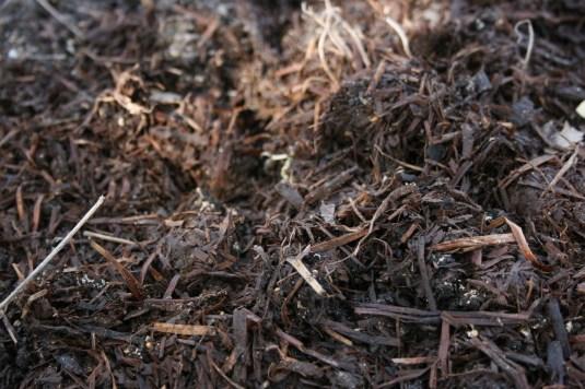 closeup photo mushroom compost