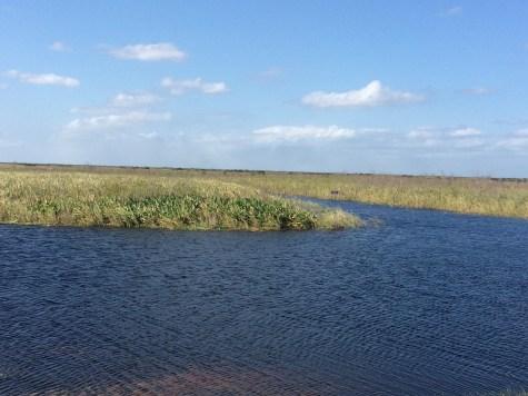 wetlands near local farm