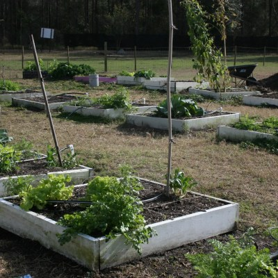Growing Green with the Ocoee High School Garden