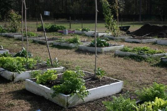 ocoee high school garden