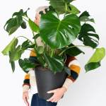 Easiest Houseplants That Anyone Can Grow Bloomscape