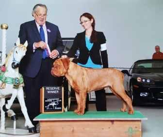 Blooms County Dogue de Bordeaux Awards 3