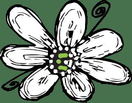 blooms flower alone