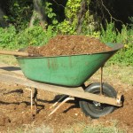 So you want to grow a garden; Gardening 101