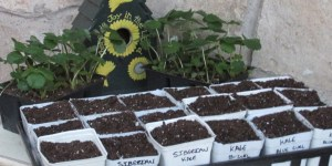 The Seeds are in the Ground: Gardening 101
