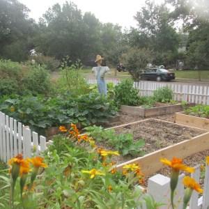 My Front Yard Garden.