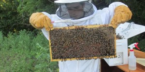 """We are Bee Keepers! See the Start of Our """"Newbee"""" Adventure!"""