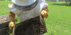 Update on the Bee Hive. Let's All Learn the Waggle Dance!