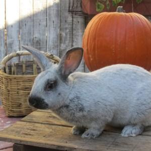rabbits-buddy-and-dolly-001