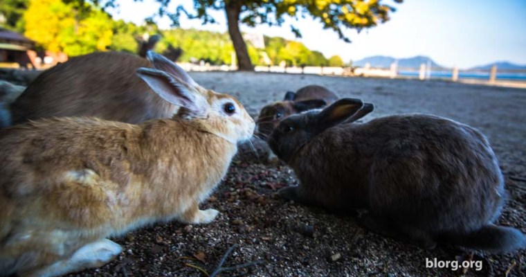 Bunny Bunny Island: An Island In Japan Full Of Bunnies! (Part 1)