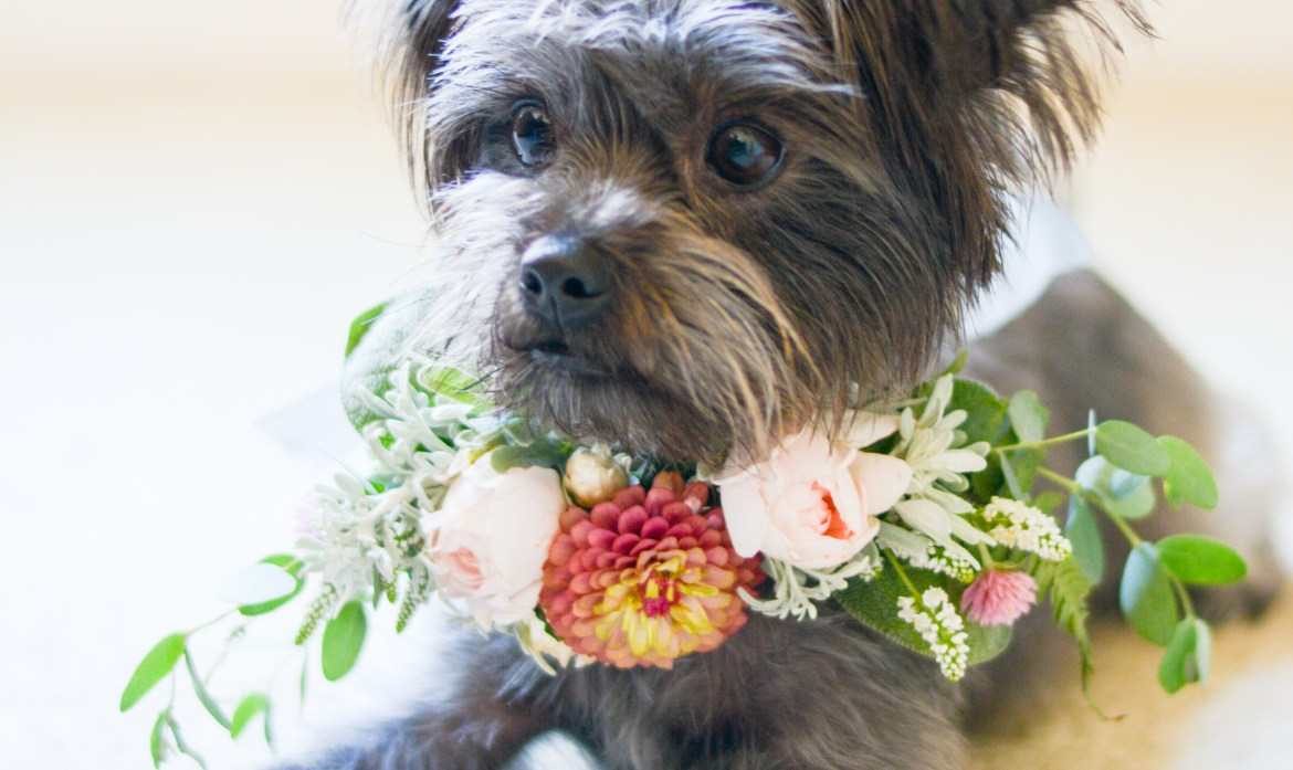 Pups in Petals – Puppy Flower Style