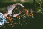 How to Grow an Edible Garden, Part 2: Mistakes to Avoid