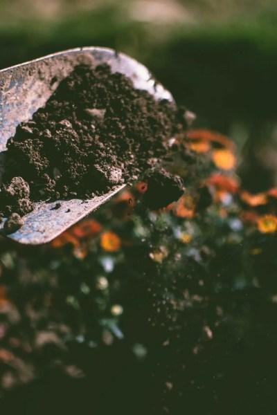 edible garden work