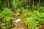 Designing an Edible Garden: Here are Common Mistakes to Avoid