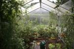 3 Edible Garden Ideas You Should Definitely Try Today