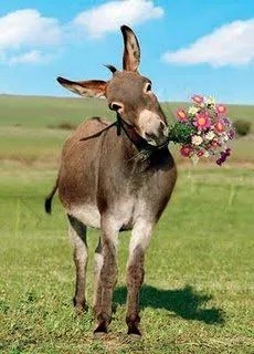 She Blossoms What Difference Does an Easter Donkey Make Blossom Tip 83