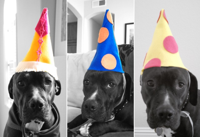 DIY Dog Birthday Hat