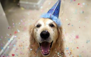 Dog Birthday Hats {The Cutest!}