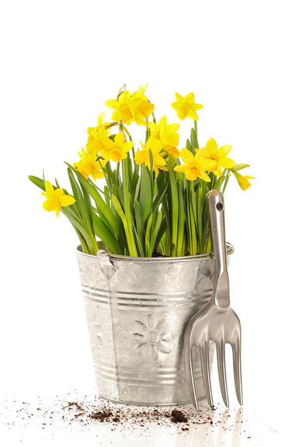 Lovely Daffodil Centerpieces B Lovely Events