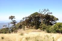 Trek on Mount Vistoria