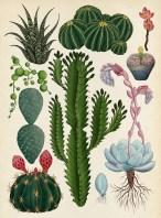 botanicum-6