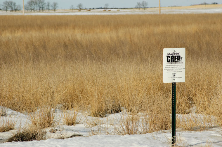 CREP Convinces Some Landowners To Keep Land In CRP And Assures Hunter Access Local News