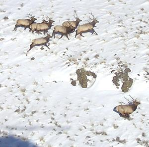Image result for Elko COunty Pics