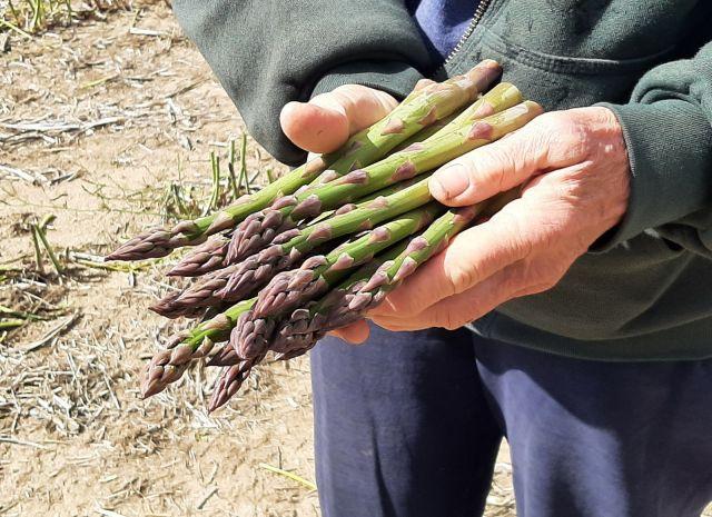 FRE Handful of asparagus.jpg