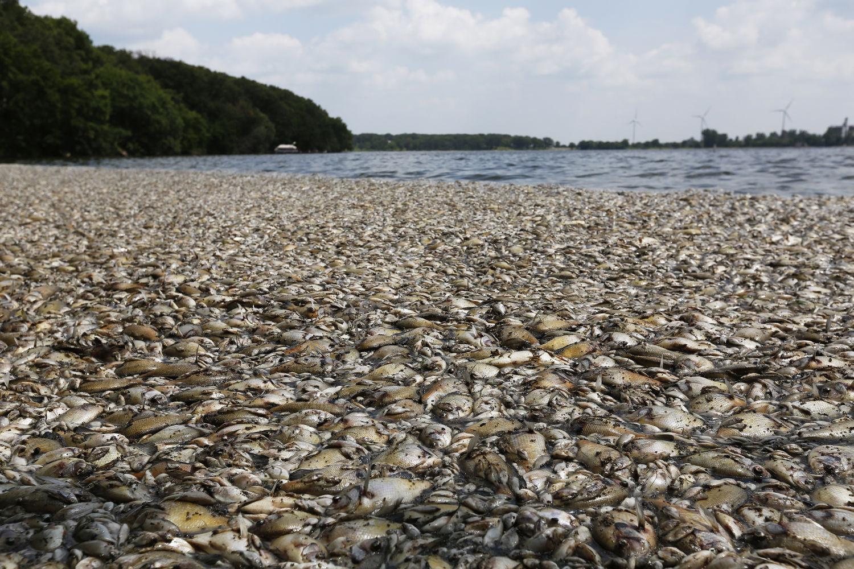 Fish Kill Crystal Lake
