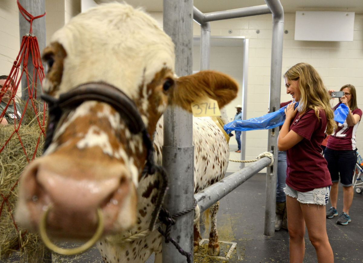 Texas A&M Offers Insight Into World Of Veterinarians At