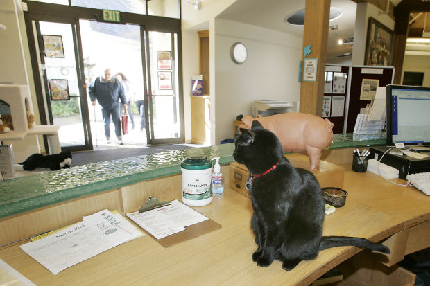 Elsie The Library Cat