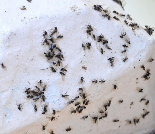 Pictures Of Flying Ants Pool