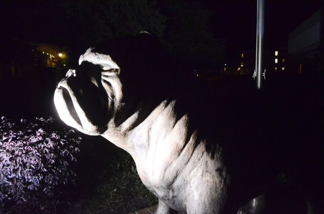 LIBRARY scsu at night bulldog illustration