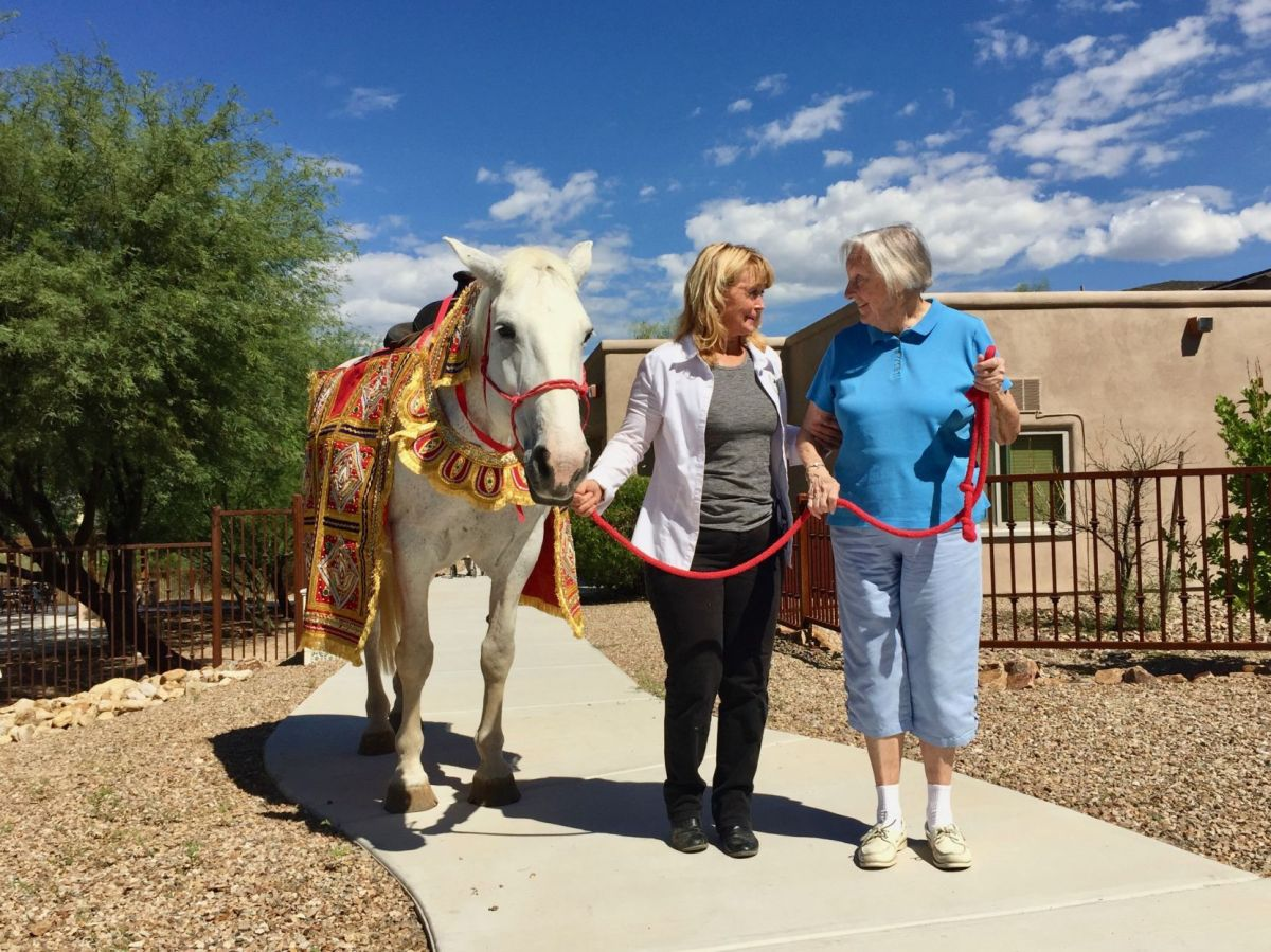 Hire A Horse For Your Wedding And Support Equine Therapy For Tucson Kids And Seniors Tucson Wedding Guide Tucson Com