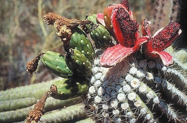 Desert Animal Pictures Print