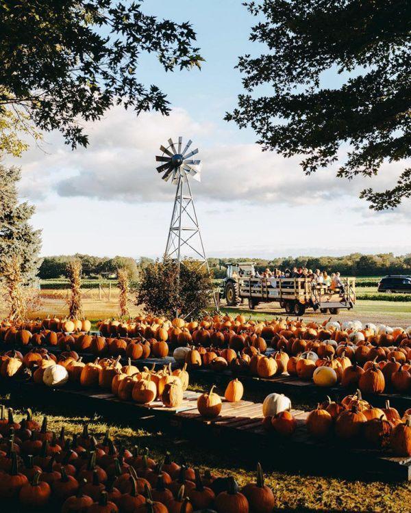 BLUE ZONES: The great pumpkin