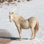 Deadline To Comment On Heber Wild Horse Plan Approaching Heber Overgaard Wmicentral Com