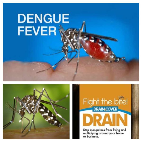Alert for mosquito-borne dengue fever