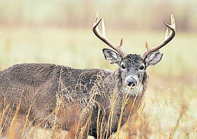 Deer disease detected for first time in area county