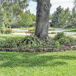 Master Gardener Putting Flower Beds Under Trees Can Hurt The Tree Home Garden Tulsaworld Com