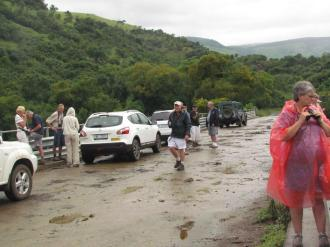 Mkomazi Bridge covered in cow poo