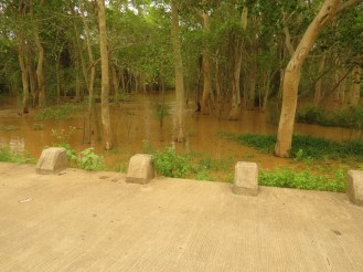 Fig Forest under water all the way from Mkuze River bridge to Ophanse Gate into Mkuze March 2013 - one month earlier.