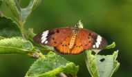 Up-side down Flutter-by - unidentified