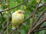 Bird for ID